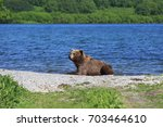 A brown bear lying on the shore of Kurile Lake after the lunch at South Kamchatka Sanctuary