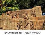 baboons. | Shutterstock . vector #703479400