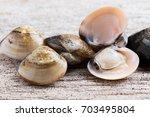 fresh enamel venus shell ... | Shutterstock . vector #703495804
