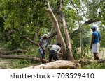 Small photo of Kolkata, India - August 10, 2017: People cutting tree. Deforestation is one of the major reason for increasing global warming.