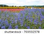 clinopodium chinense  | Shutterstock . vector #703532578