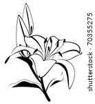 beautiful tropical  lillies | Shutterstock . vector #70355275