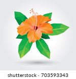yellow hibiscus isolated on... | Shutterstock .eps vector #703593343