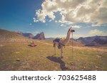 lama  lama glama  of a lama... | Shutterstock . vector #703625488