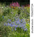 Small photo of Colourful Herbaceous Border of Agapanthus, Echinops and Veronica in a Country Cottage Garden within Dartmoor National Park in Rural Devon, England, UK