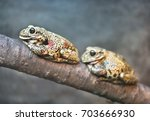 Small photo of Two tree toad resting on a tree branch