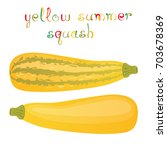 yellow summer squash. two kinds ... | Shutterstock .eps vector #703678369