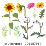 set of autumn flowers  yellow... | Shutterstock .eps vector #703687954