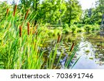 Pond And Cattails In Summer In...
