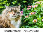 Closeup Portrait Of Fluffy ...