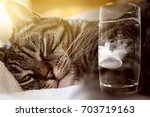 Stock photo cat has a hangover and takes a headache tablet 703719163