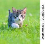 Stock photo little striped kitten hiding in the grass 703802566