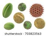 pollen grains from different...   Shutterstock . vector #703823563
