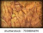 autumn dry maple leaves... | Shutterstock . vector #703884694