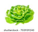 lettuce salad rosette head with ... | Shutterstock . vector #703939240