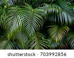 leaves in the rainforest in asia | Shutterstock . vector #703992856