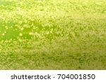 cucumber skin pattern  cucumber ... | Shutterstock . vector #704001850