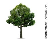 tree isolated on white. | Shutterstock . vector #704031244