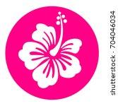 illustration of hibiscus pink... | Shutterstock .eps vector #704046034