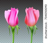 realistic roses bud with stem... | Shutterstock .eps vector #704050090