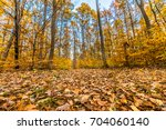 rural road in the forest ... | Shutterstock . vector #704060140