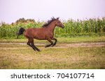 beautiful horse in run | Shutterstock . vector #704107714