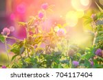 Wild Flowers Of Clover In A...