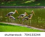 bird painted stork flying... | Shutterstock . vector #704133244