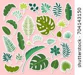 vector set of tropical leaves.... | Shutterstock .eps vector #704143150