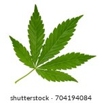 cannabis leaf isolated on white ... | Shutterstock . vector #704194084