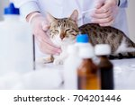 cat visiting vet for regular... | Shutterstock . vector #704201446