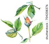 wildflower rose flower in a... | Shutterstock . vector #704208376