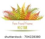 polypodiophyta plant leaves... | Shutterstock .eps vector #704228380