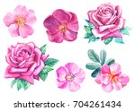 watercolor illustration set of ... | Shutterstock . vector #704261434