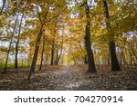 autumn forest scenery with gold ... | Shutterstock . vector #704270914