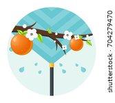 orange plantation watering flat ...   Shutterstock .eps vector #704279470