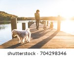 woman walking the dogs on the... | Shutterstock . vector #704298346