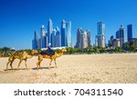 the camels on jumeirah beach... | Shutterstock . vector #704311540