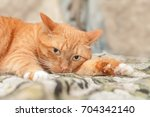 portrait of a beautiful cat... | Shutterstock . vector #704342140