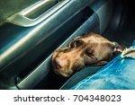 dog. dog sleeps in the car   Shutterstock . vector #704348023