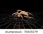 Garden Spider On A Silver Web
