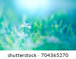 close up nature background.... | Shutterstock . vector #704365270