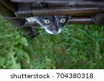 little cat playing in the...   Shutterstock . vector #704380318