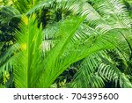 palm trees close up | Shutterstock . vector #704395600