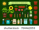 houseplants care process icons... | Shutterstock .eps vector #704462053