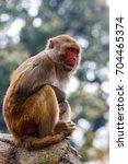 Small photo of Macacus monkey living in the Swayambu Nath Temple, Kathmandu, Nepal