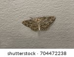 Owlet Moths On Stone Wall...