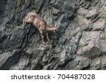 mountain goat climbing on rock... | Shutterstock . vector #704487028