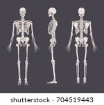 set of realistic skeletons... | Shutterstock .eps vector #704519443
