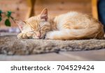 a red cat lies on the rug on... | Shutterstock . vector #704529424
